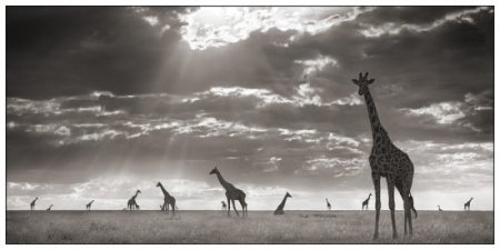 Чёрно-белые фотографии диких животных из Африки