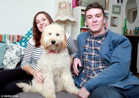 Самая счастливая собака Великобритании