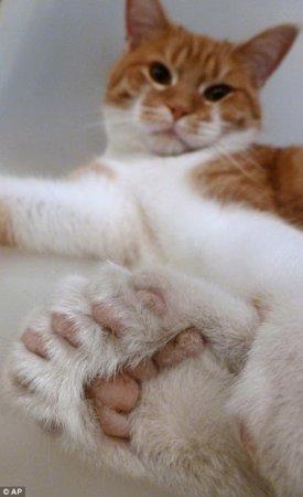 Кот с 26 пальцами спасает приют для животных