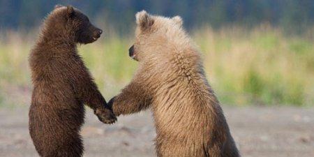 Чуткие и трогательные отношения животных на фотографиях