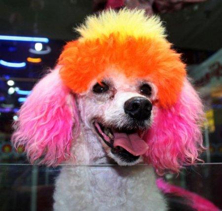 Новая китайская собачья мода