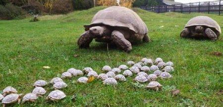 Огромная семья черепашек