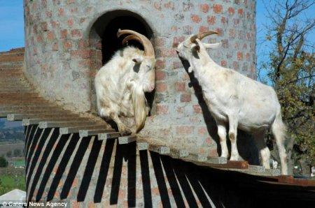 Замок для коз