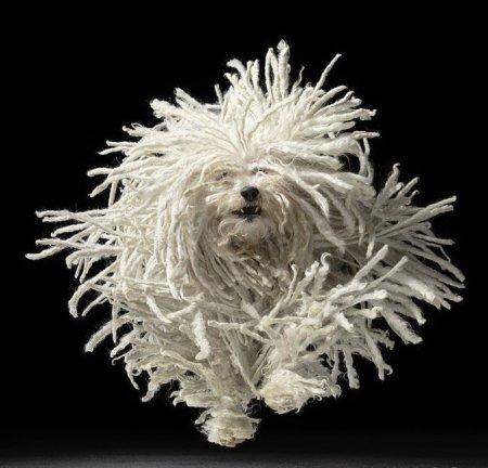 Невероятно красивые фото собак