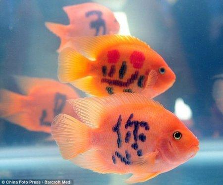 Китайский бизнес, или Татуированные рыбки