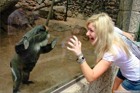 Monkey Park на Канарах