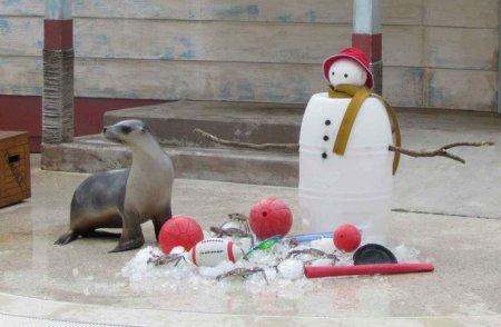 Животные из Австралийского зоопарка празднуют Рождество