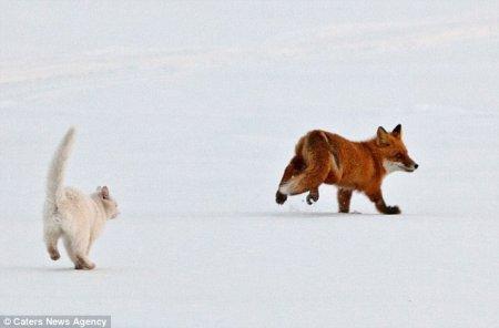 Кот вместо сторожевой собаки