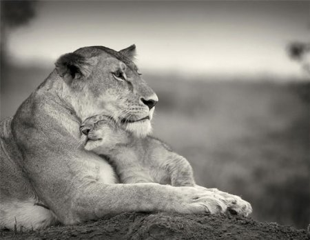 Удивительный животный мир Кении