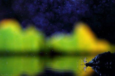 """Красочный мир насекомых """"WonderLand"""""""