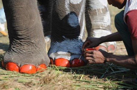 Слоны - футболисты