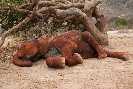 Грязевые ванны для слонят