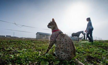 Самый высокий кот в мире