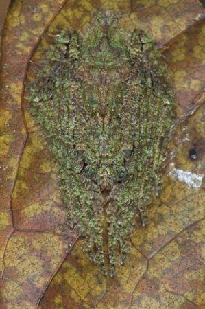 Мир насекомых глазами фотографа Piotr Naskrecki