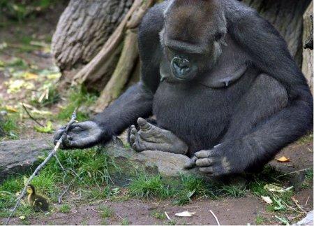 Самые забавные животные 2011