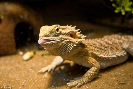 В зоомагазине украли 100 экзотических животных