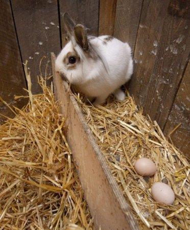 Кролик Отто считает себя курицей