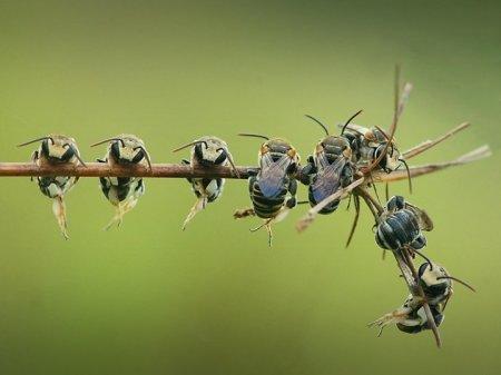 Красочная макросъемка насекомых