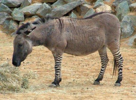 Самые необычные животные-гибриды