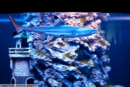 Выставка «Тайны подводного мира»
