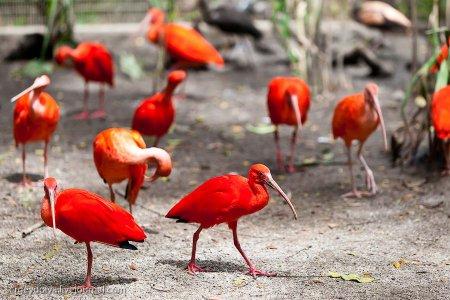 Сингапурский парк птиц
