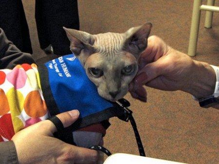 Кот спасает пожилых людей от депрессий