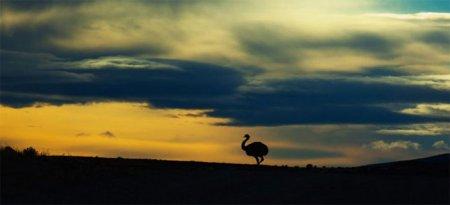 Животные глазами фотографа Алекса Сабери