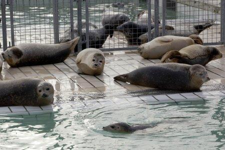 Детский дом для тюленей-сирот в Голландии
