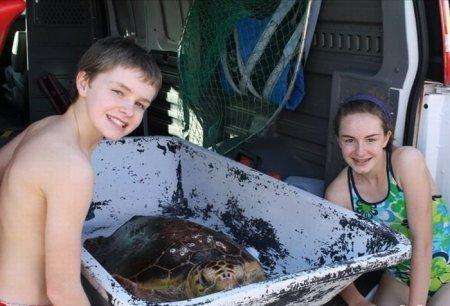 Спасение черепахи от фугу