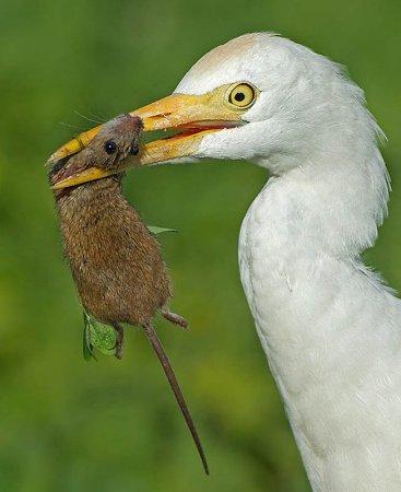 Удивительные фотографии птиц Яки Зандера
