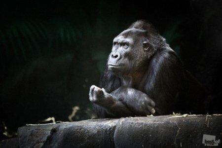 Лучшие фотографии животных России 2011