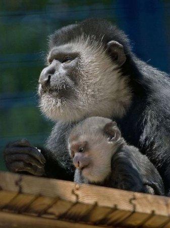 Эти забавные обезьяны