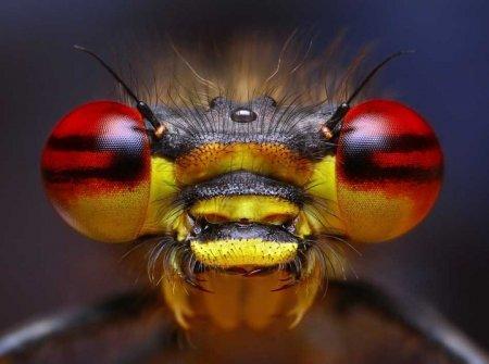 """""""Лица"""" насекомых"""