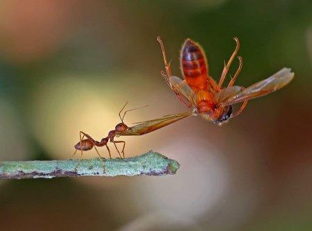 Этот забавный мир насекомых
