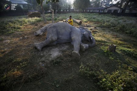 Слоны в Непале