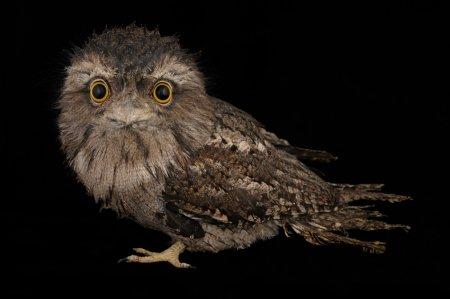 Как фотографируют животных для National Geographic