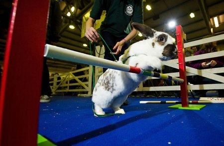 В Лондоне прошла кроличья Олимпиада
