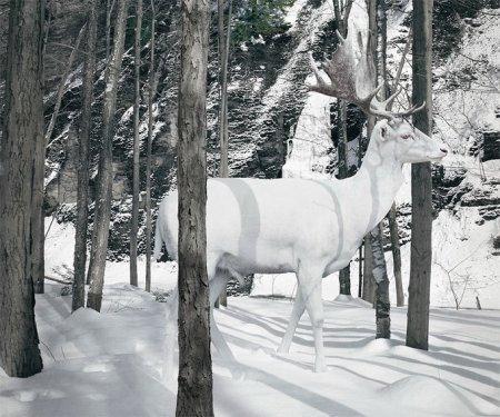 Животные от Simen Johan