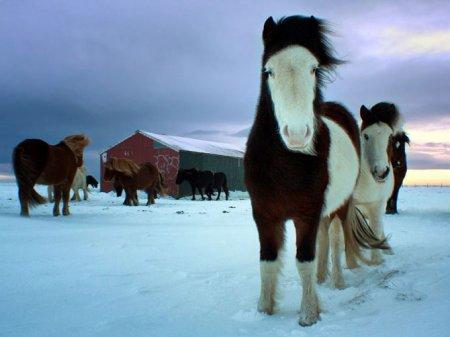 Лучшие фотографии животных за январь от National Geographic