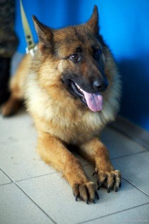 Один день с собакой-наркоборцом
