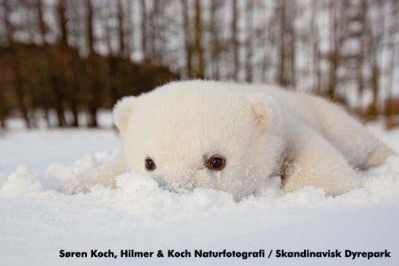 Медвежонок Сику в снегу