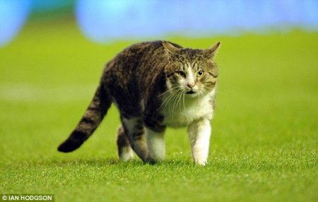 Кот стал участником матча между Ливерпулем и Тоттенхемом!