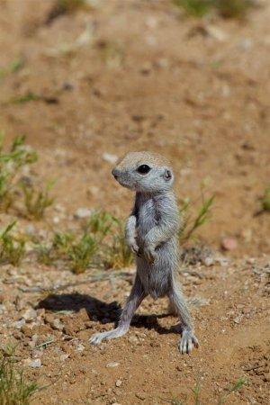 Планета животных в фотографиях