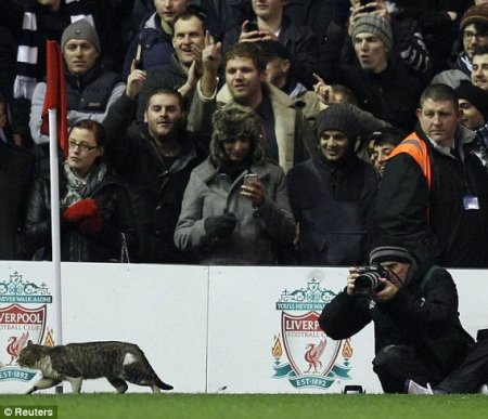 Кот со стадиона Энфилд нашел себе хозяина