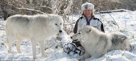 В Великобритании появились первые полярные волки