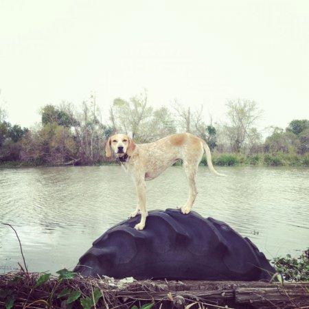 Пес по стойке смирно