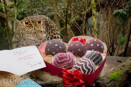 Валентинки от леопарда