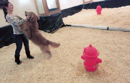 """Выставка собак """"Westminster Kennel Club 2012″"""