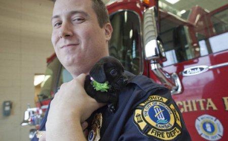 Пожарный приютил осиротевшего щенка