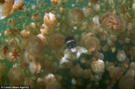 Все больше туристов хотят поплавать с медузами